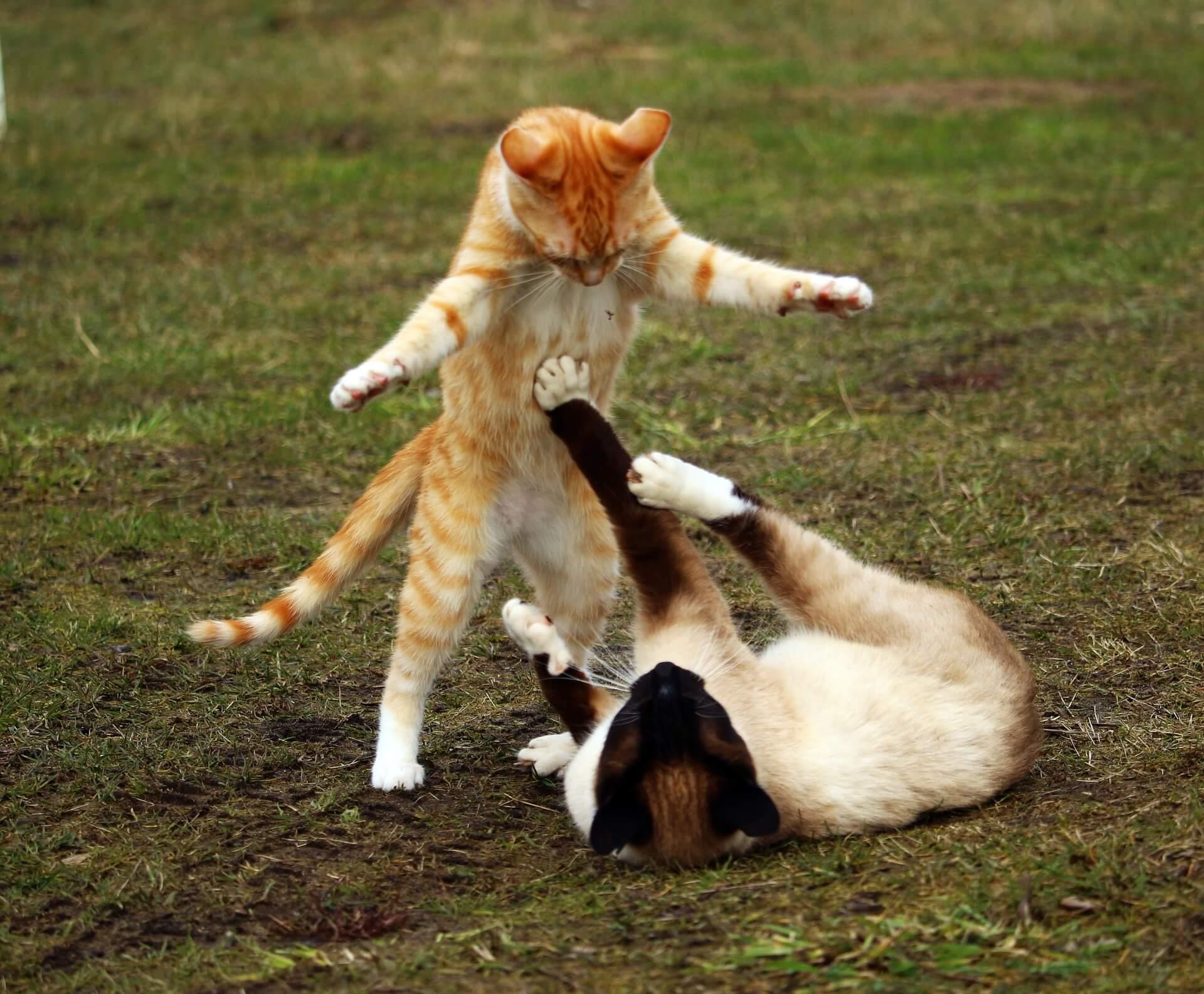 遊びあう猫2匹