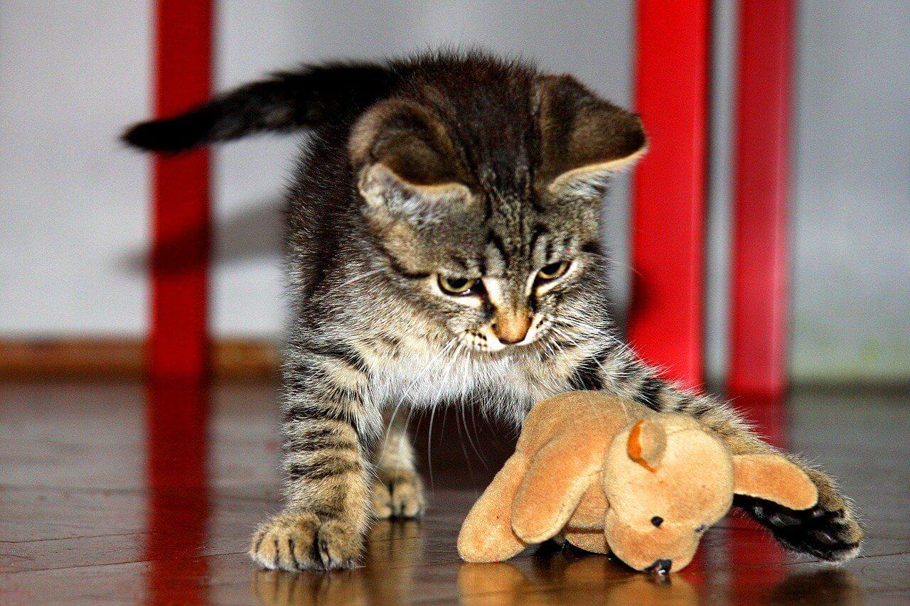 おもちゃで遊ぶ猫